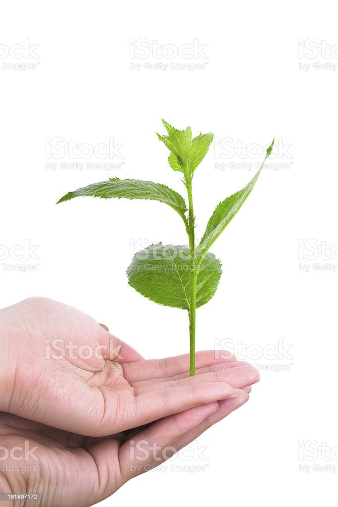 togetherness:young couple holding green plant in hands stock photo