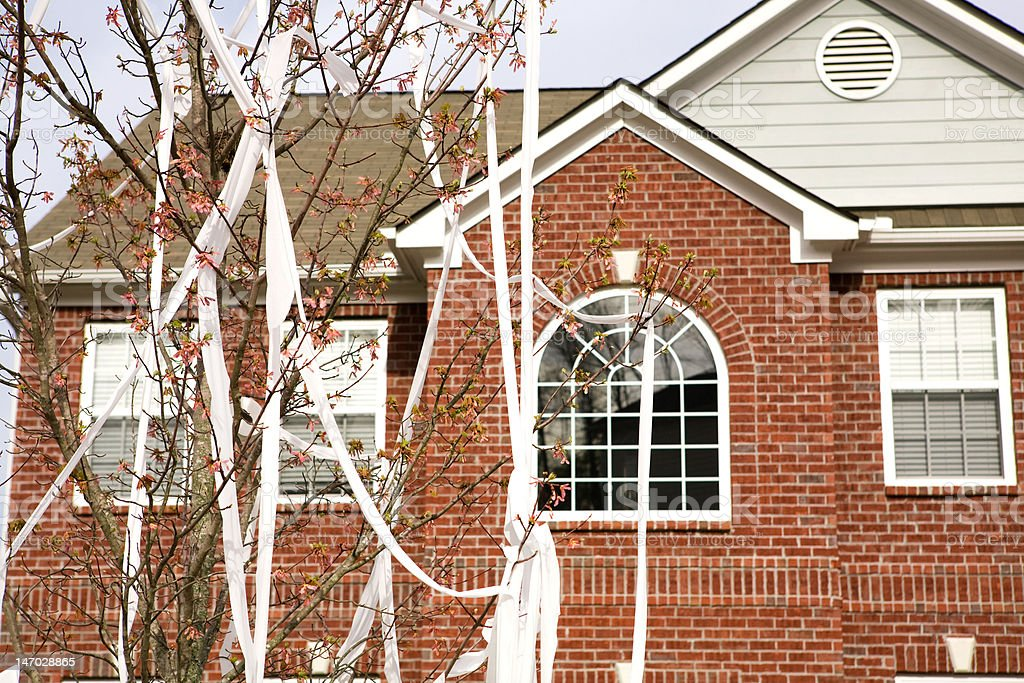Toilet Papered tree stock photo