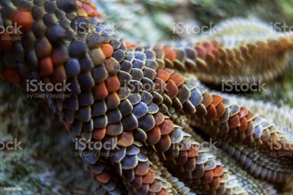 Tokay gecko foot stock photo