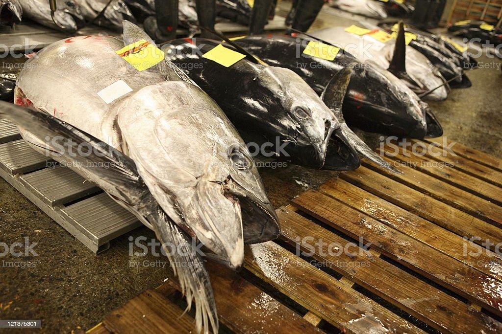 Tokyo Fishmarket royalty-free stock photo