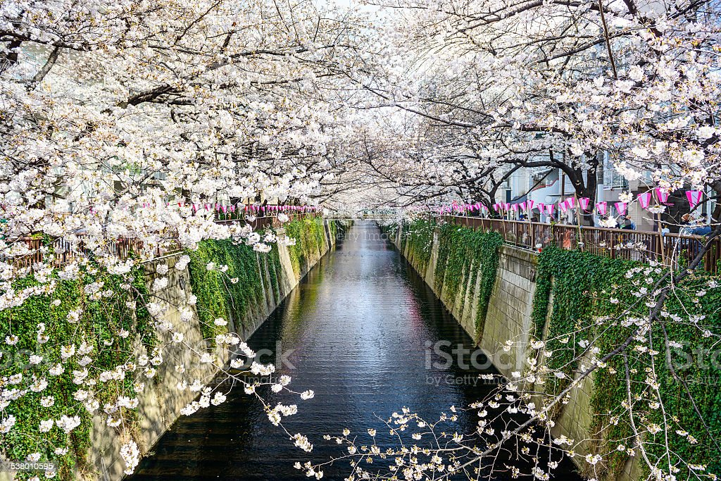 Tokyo, Japan Spring Canal stock photo