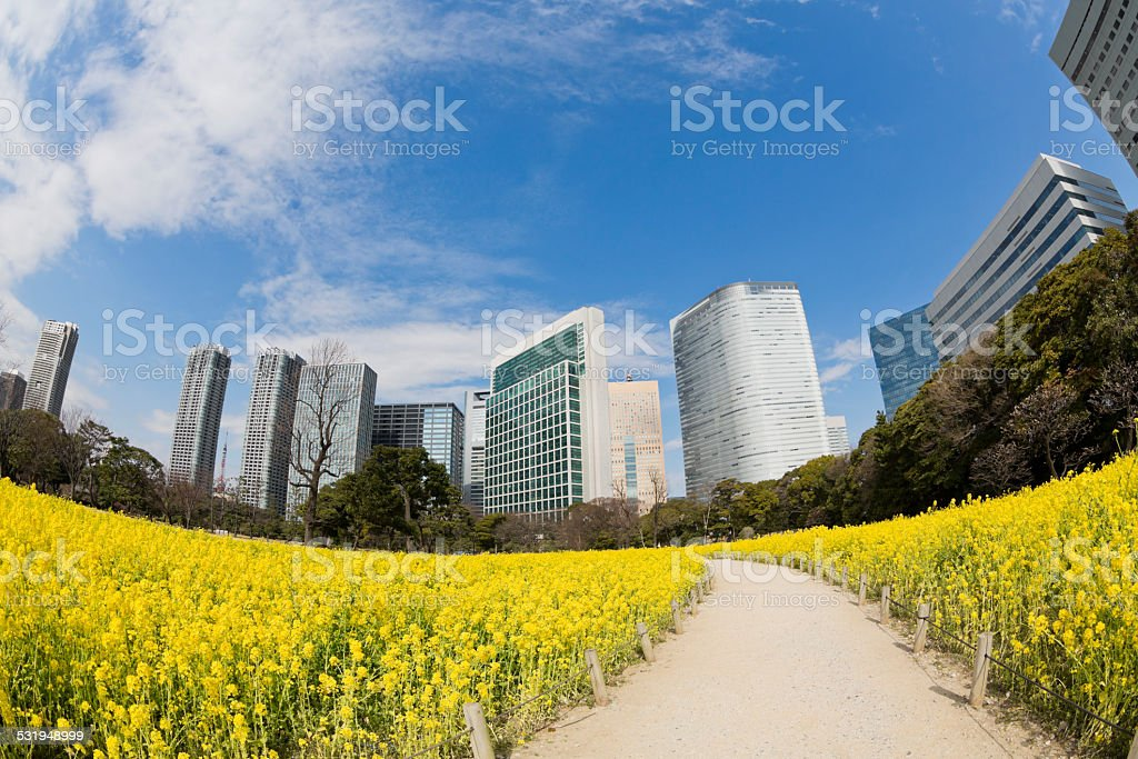 Tokyo Office Buildings in Spring stock photo