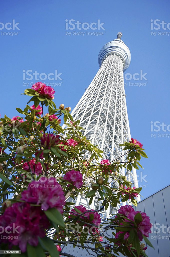 Tokyo sky tree, Japanese radio tower with pink flowers stock photo