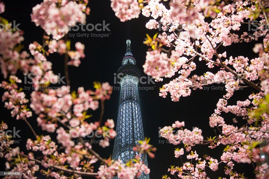 Tokyo Skytree with Sakura stock photo