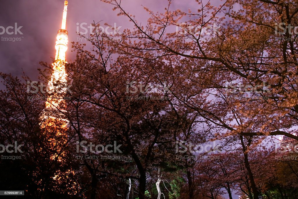 Tokyo Tower Special light up Shibakoen on Tokyo . stock photo