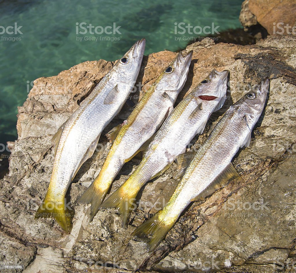 Tomakin Sand Whiting stock photo