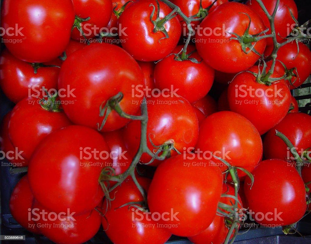 tomates stock photo