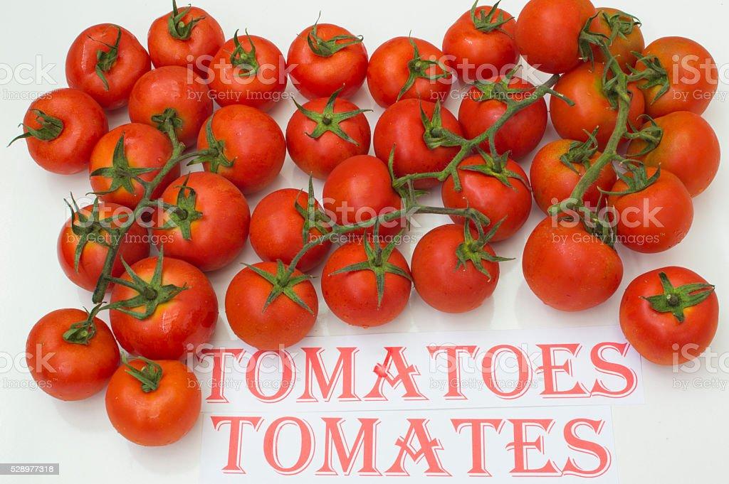 tomates sobre Fondo Blanco photo libre de droits
