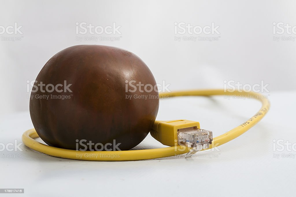 Tomato connected royalty-free stock photo