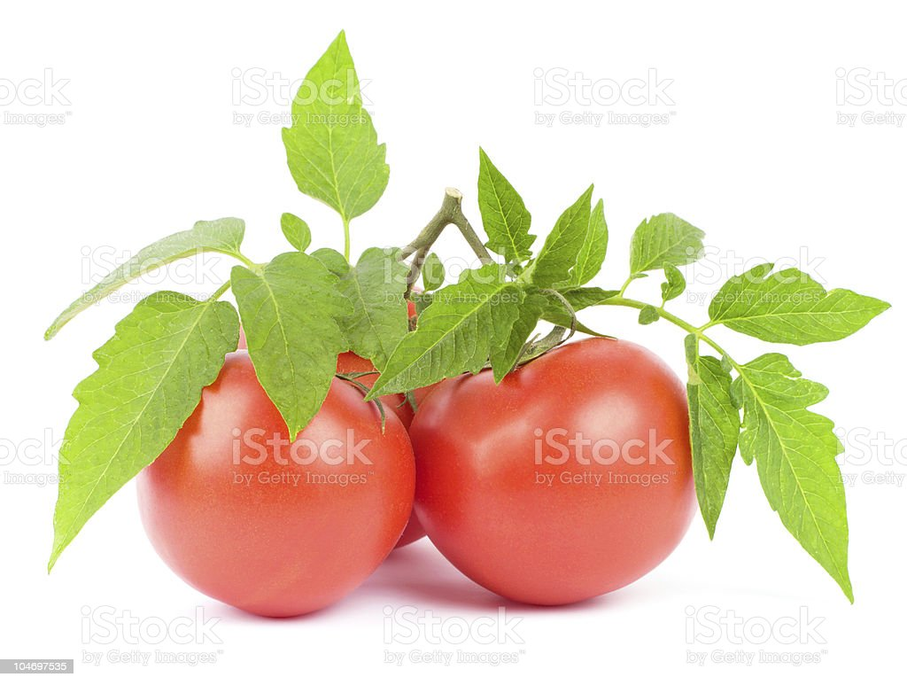 Tomato fruits royalty-free stock photo