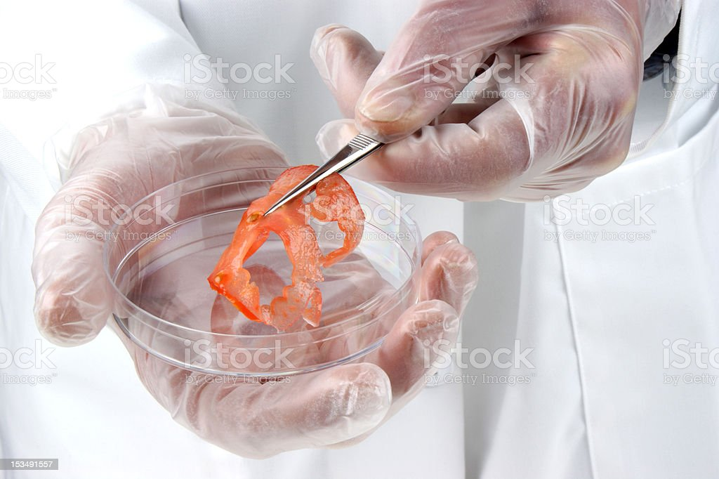tomato slice is examined in the food laboratory royalty-free stock photo