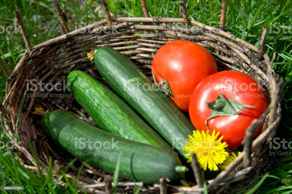 Tomatoes and cucumbers in an old basket. stock photo