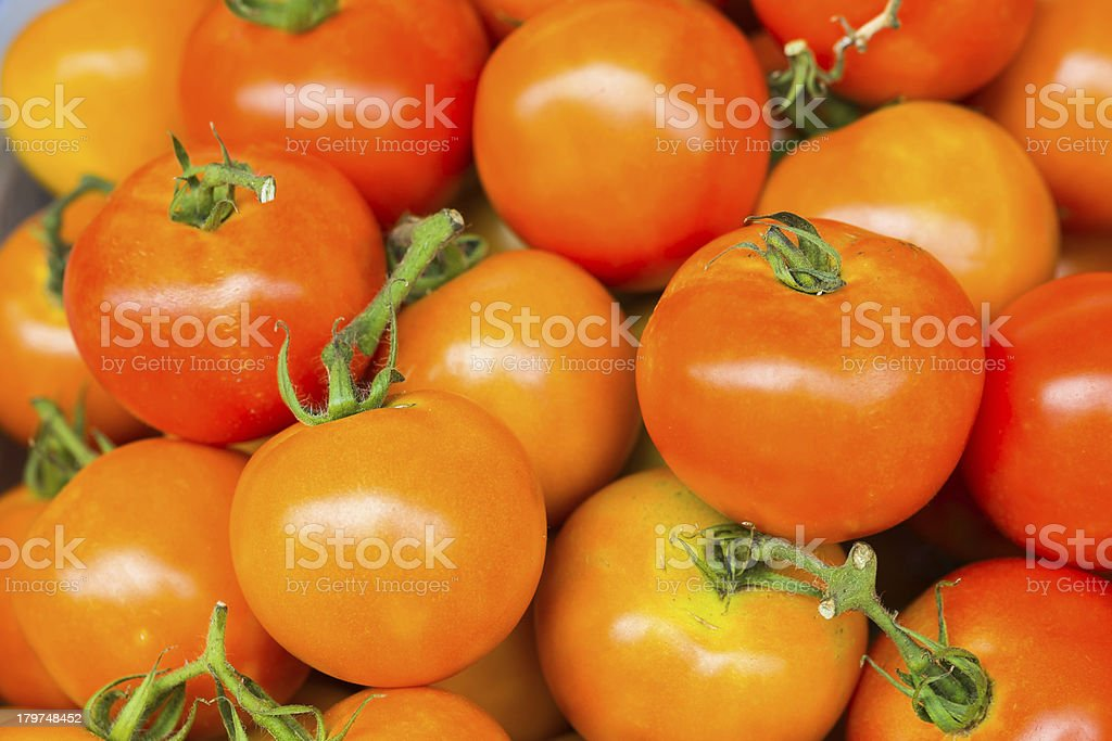 Tomatoes fresh from the farm royalty-free stock photo