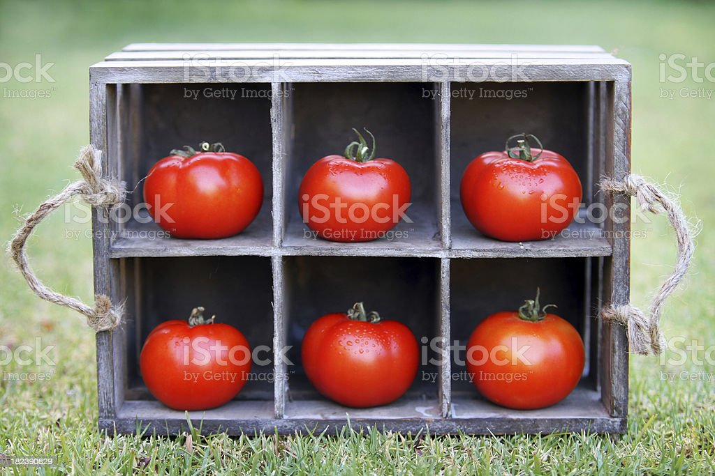 Tomatoes in a crate royalty-free stock photo