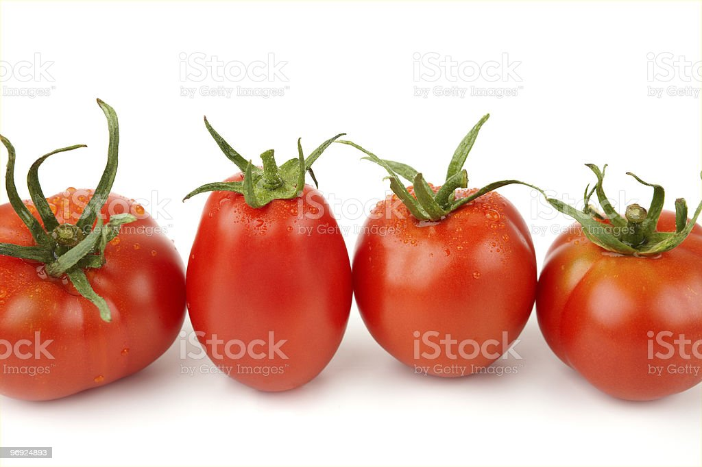 Tomatoes In A Row (XXL) royalty-free stock photo