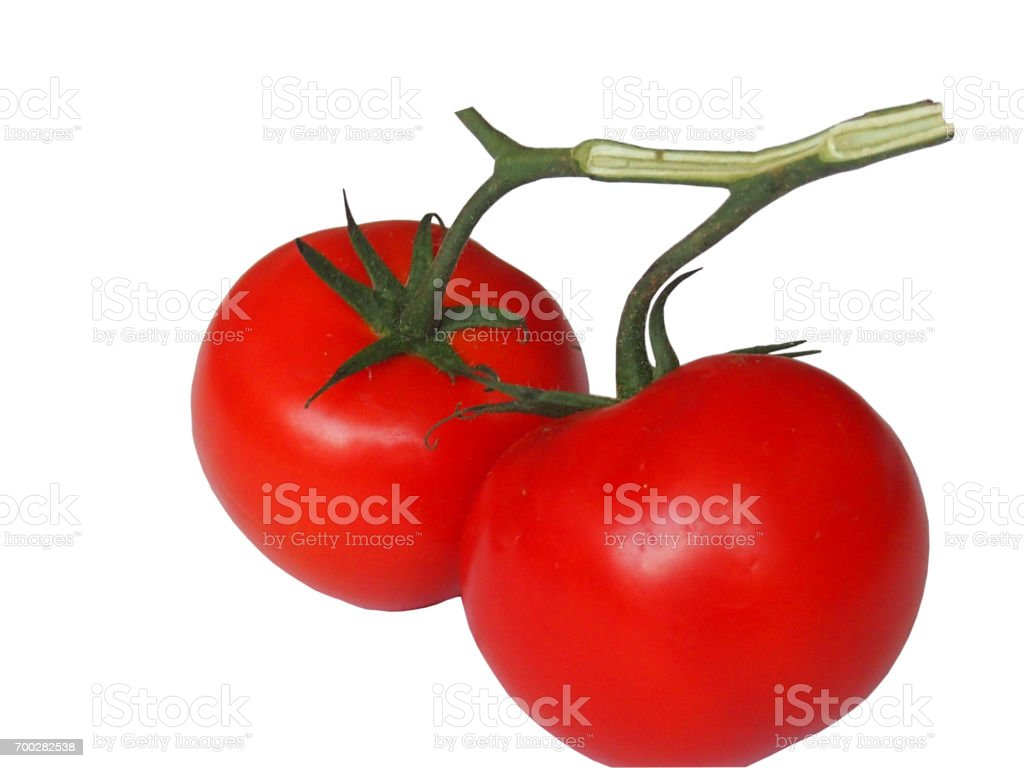 Tomatoes on a branch stock photo