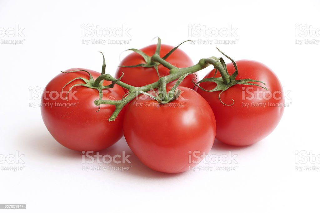 Tomatoes on a Vine stock photo