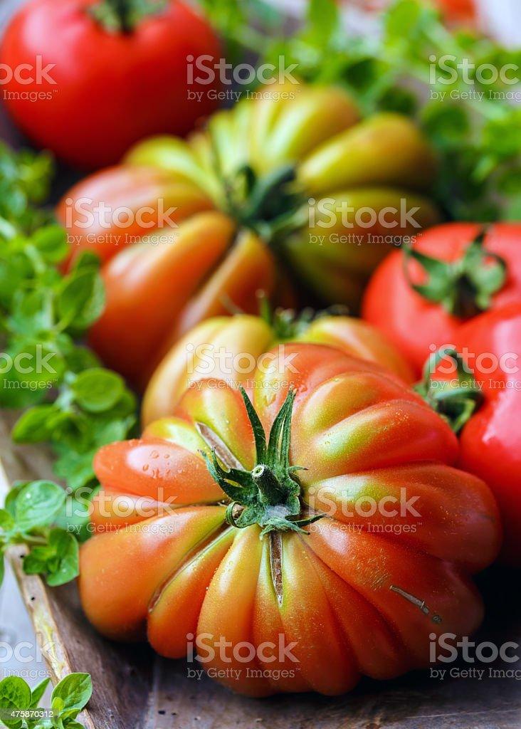 Tomatoes'Cuore di Bue' stock photo