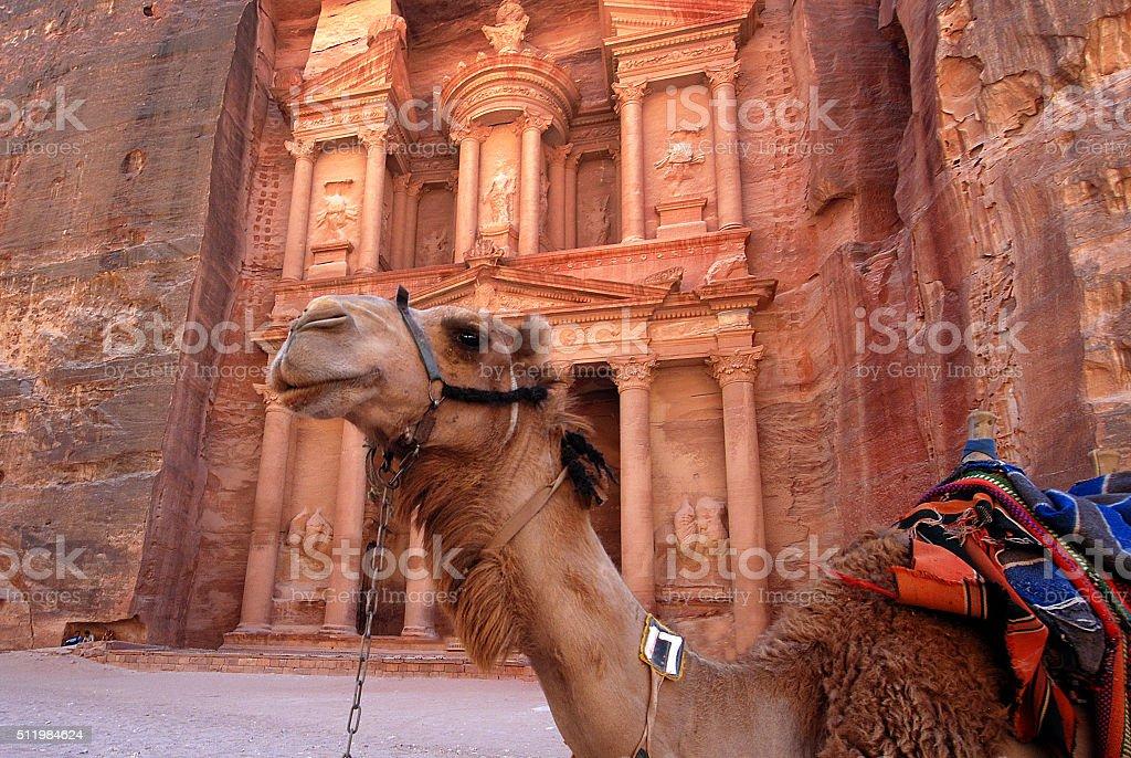 Tomb and camel in Petra, Jordan stock photo