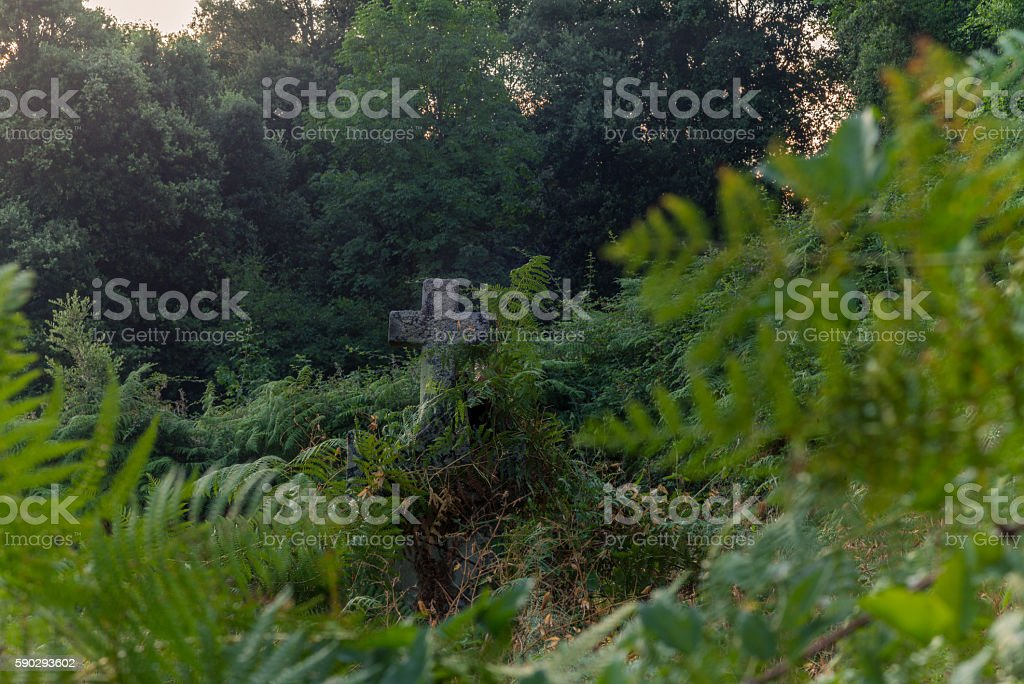 Tomb in the middle of the wild vegetation in Corsica stock photo