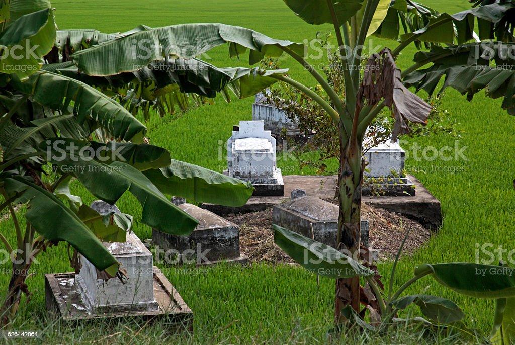 Tombs and paddy fields, Sadec, Mekong Delta, Vietnam stock photo