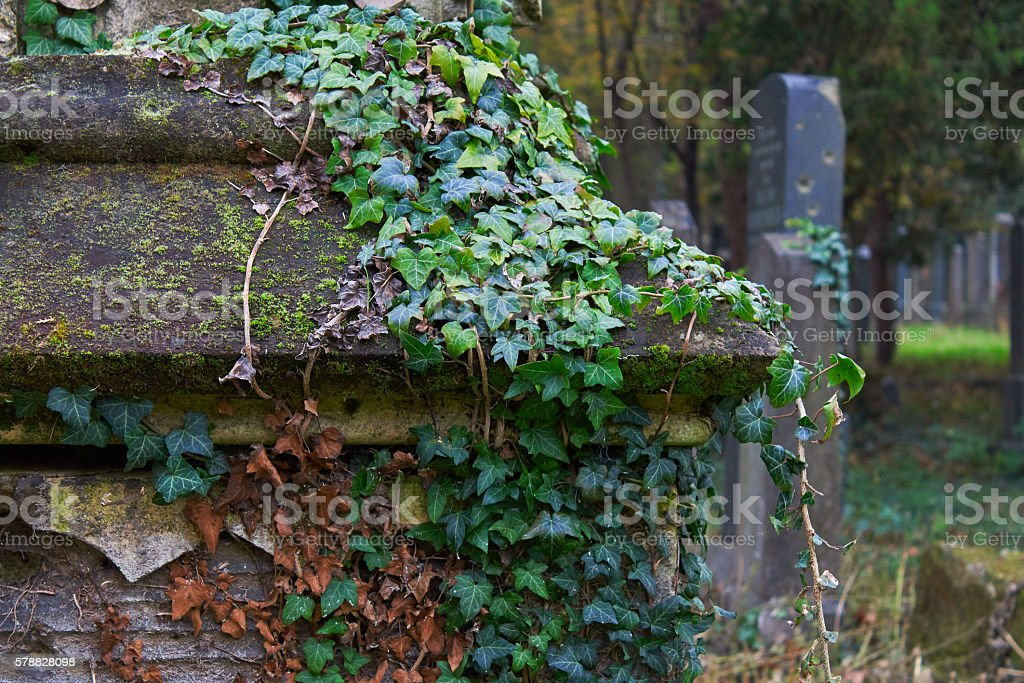 Tombstone covered with ivy stock photo