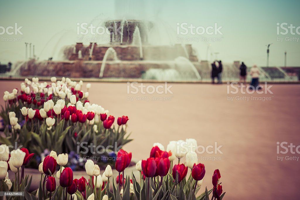 Toned image of spring flowers and fountain in downtown Chicago stock photo