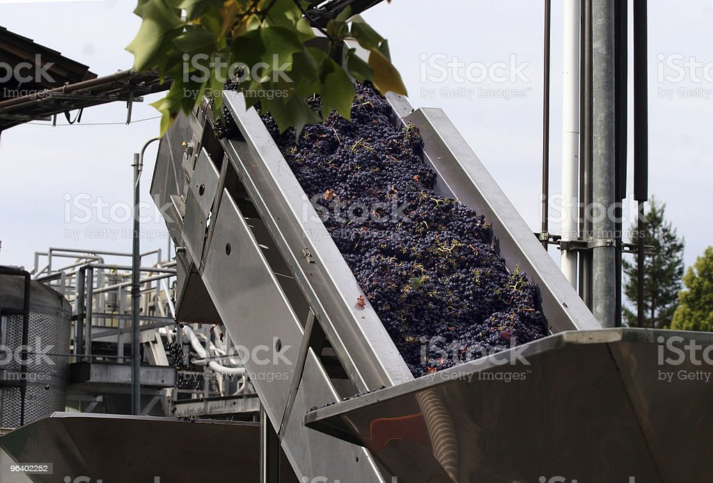 Tonnes of grapes being processed to make wine royalty-free stock photo