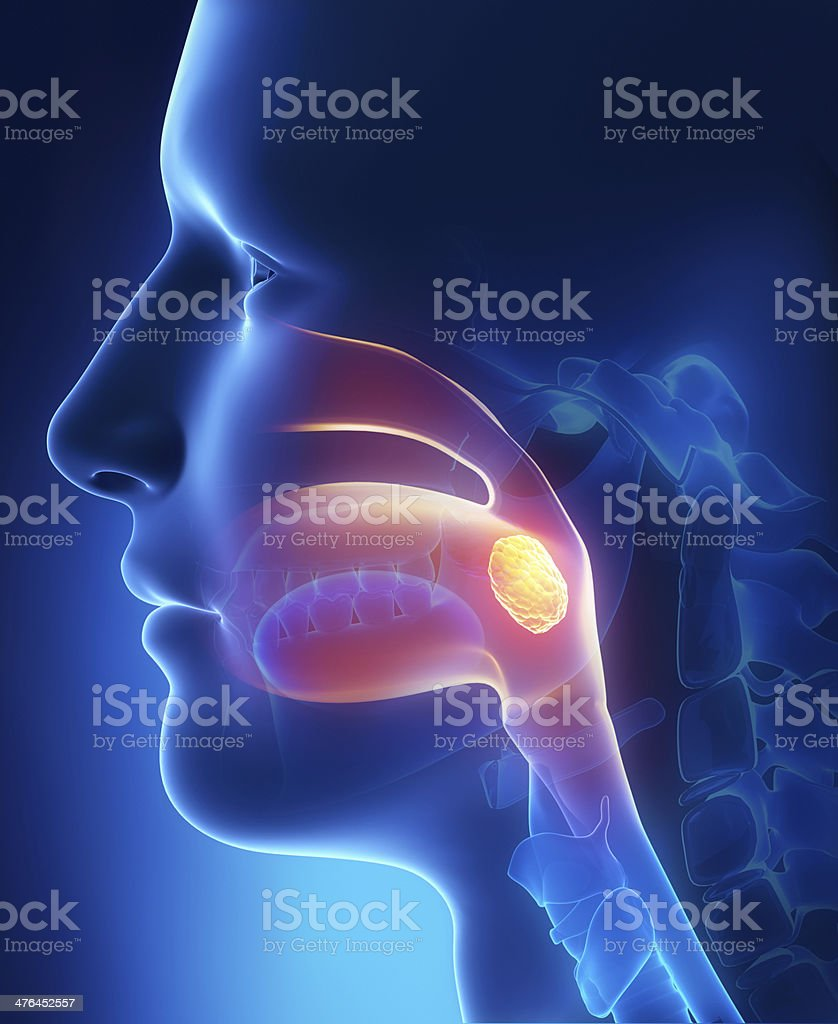 Tonsils lateral view stock photo