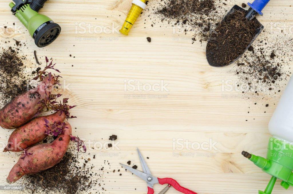 tools for sweet potato farming stock photo