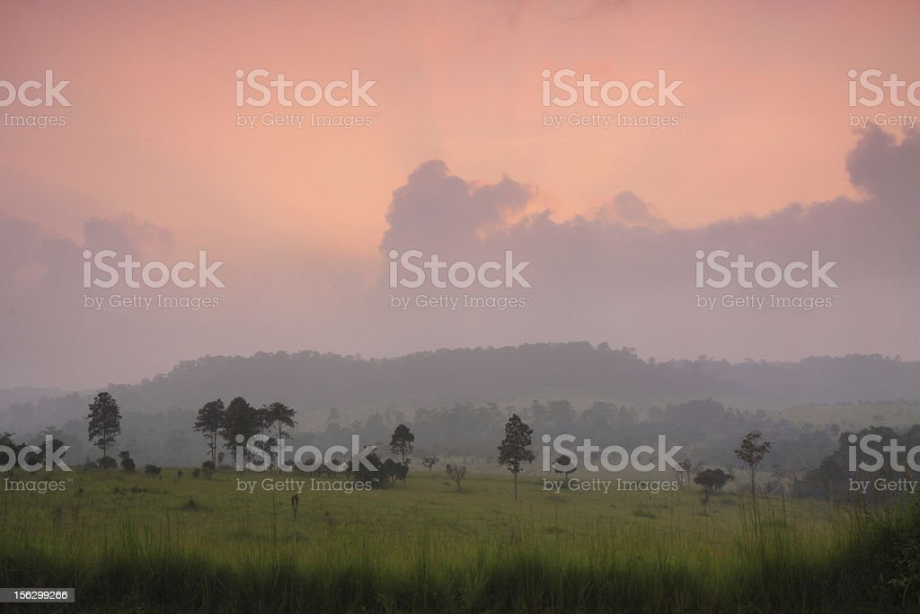 Toong Slang Luang National Park of Thailand. stock photo