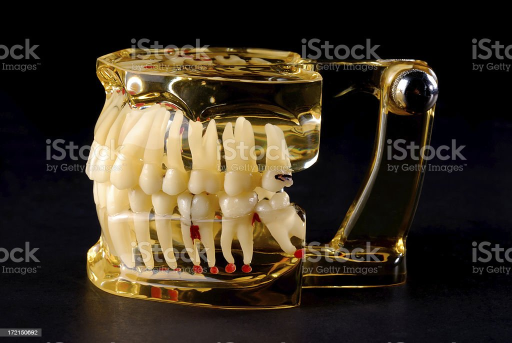 Tooth Demonstration stock photo
