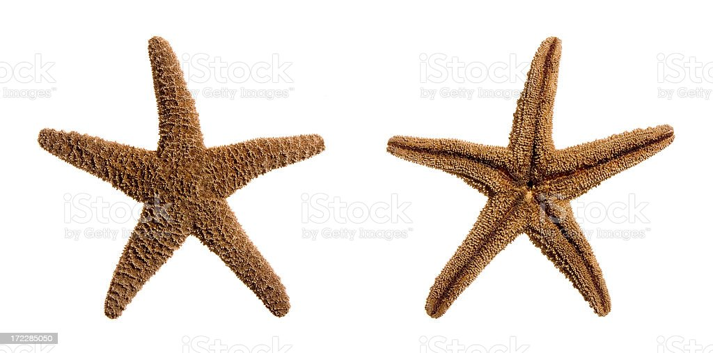 Top and bottom view of a Sugar Starfish stock photo