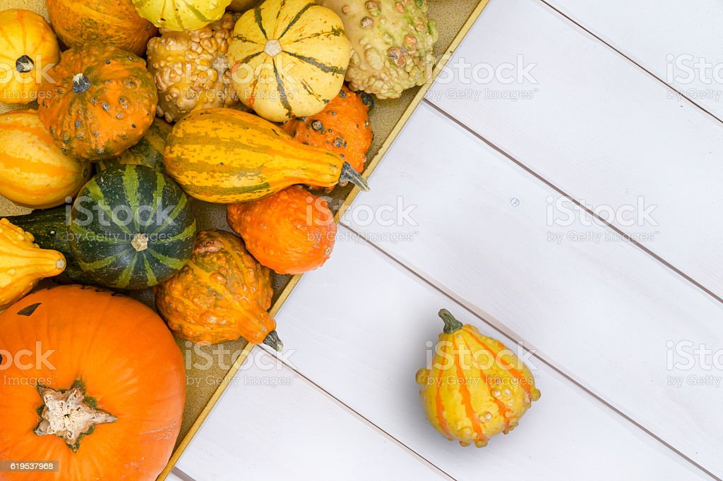 Top down view on squashes over wooden surface stock photo