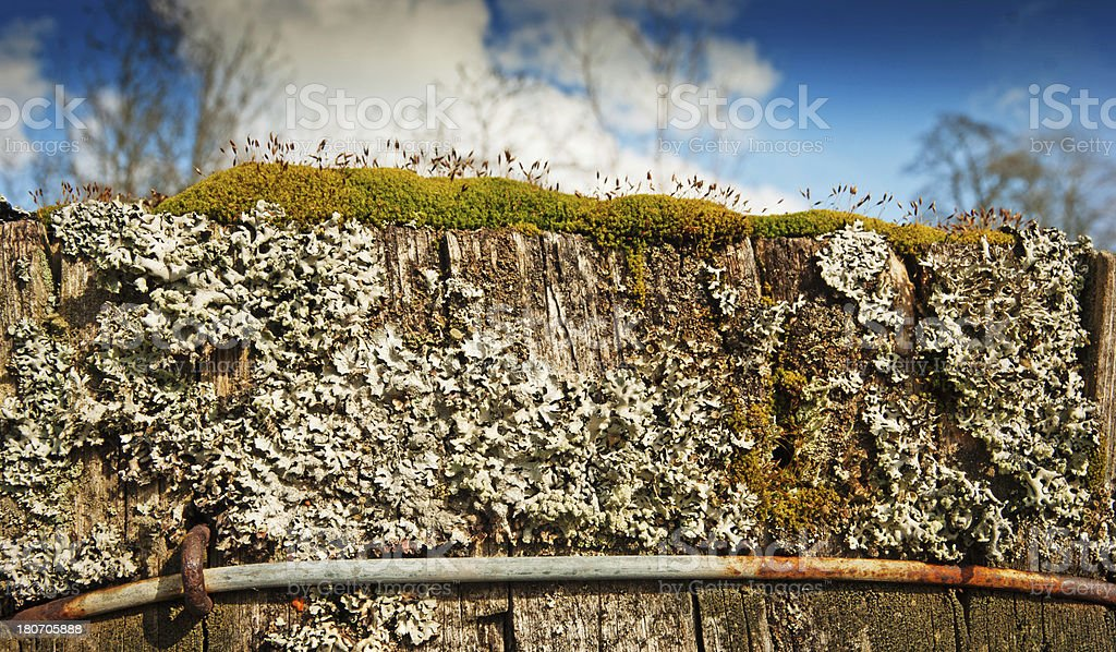 Top of a fence post royalty-free stock photo