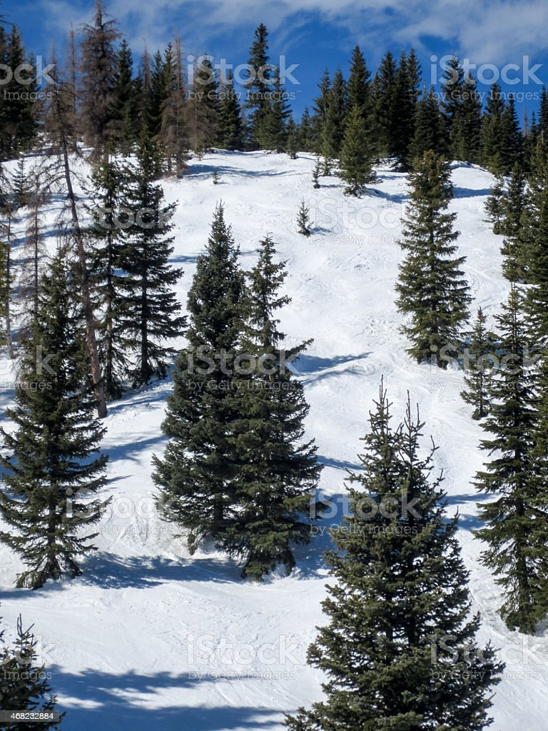 Top of a glade ski run covered in pine trees stock photo
