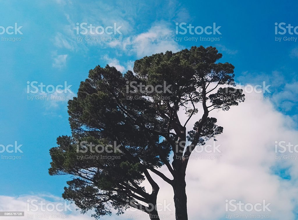 Top of a tree in a sunny day stock photo
