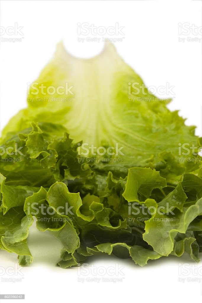 top of lettuce leaf stock photo