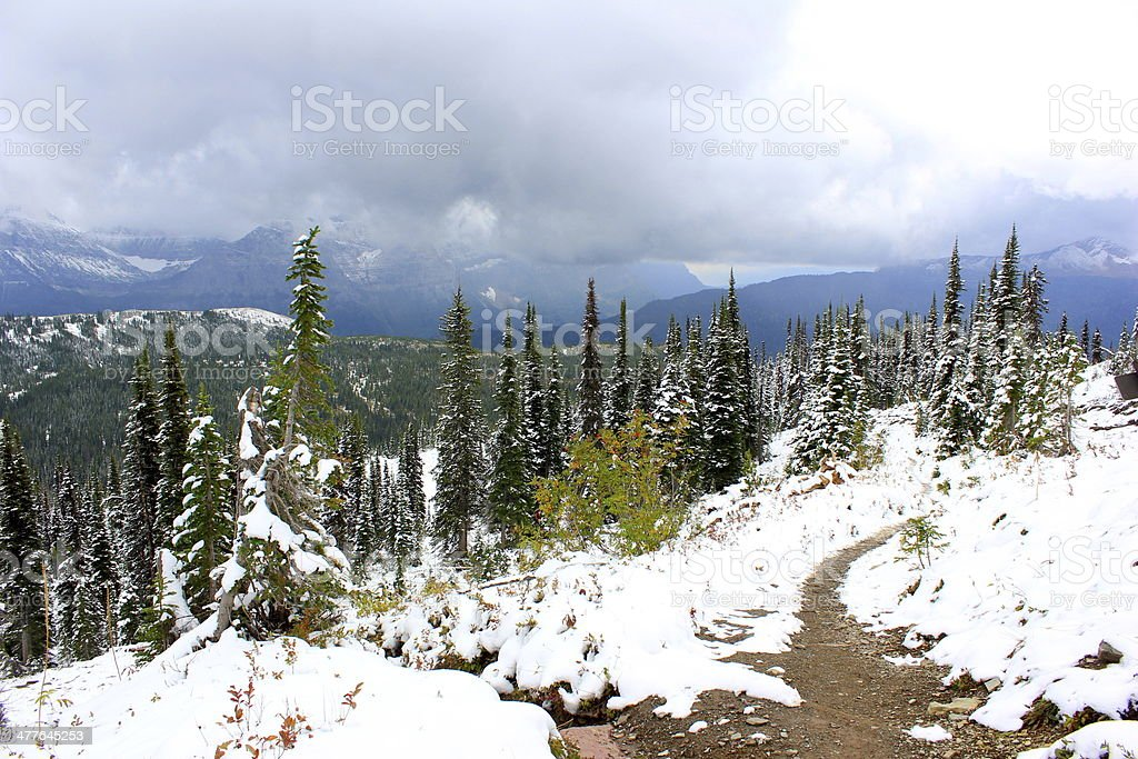 Top of the Palm Trees in Glacier National Park Montana royalty-free stock photo