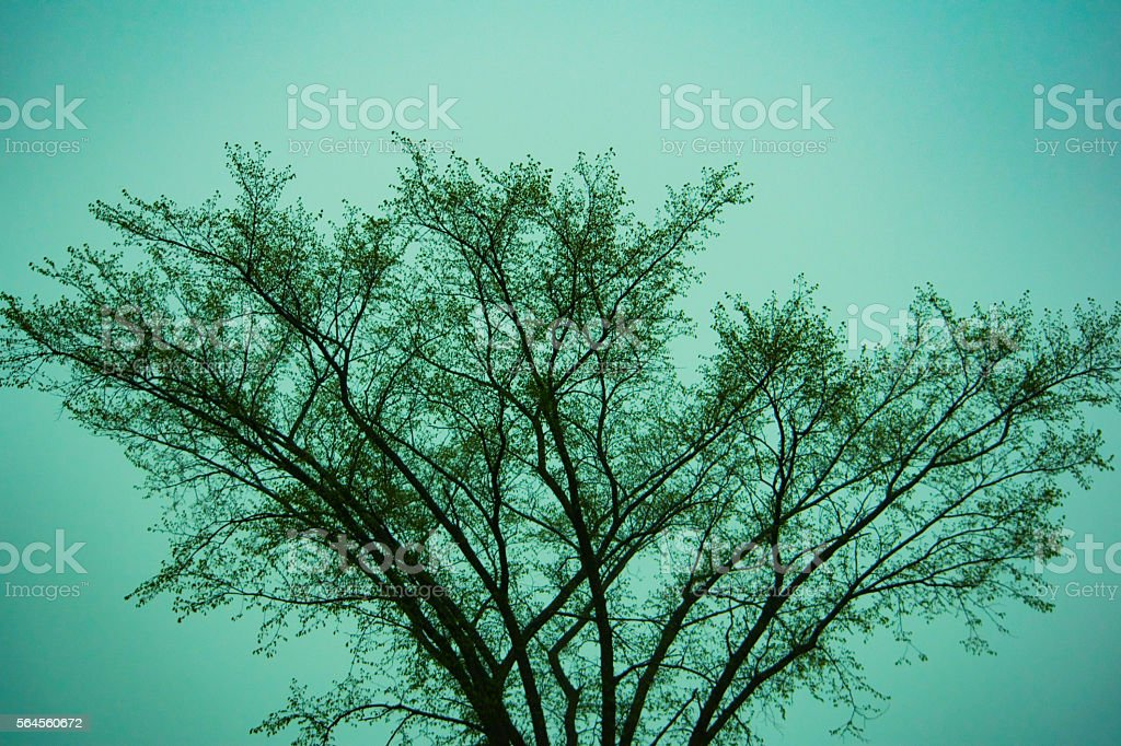 Top of tree with blue sky royalty-free stock photo