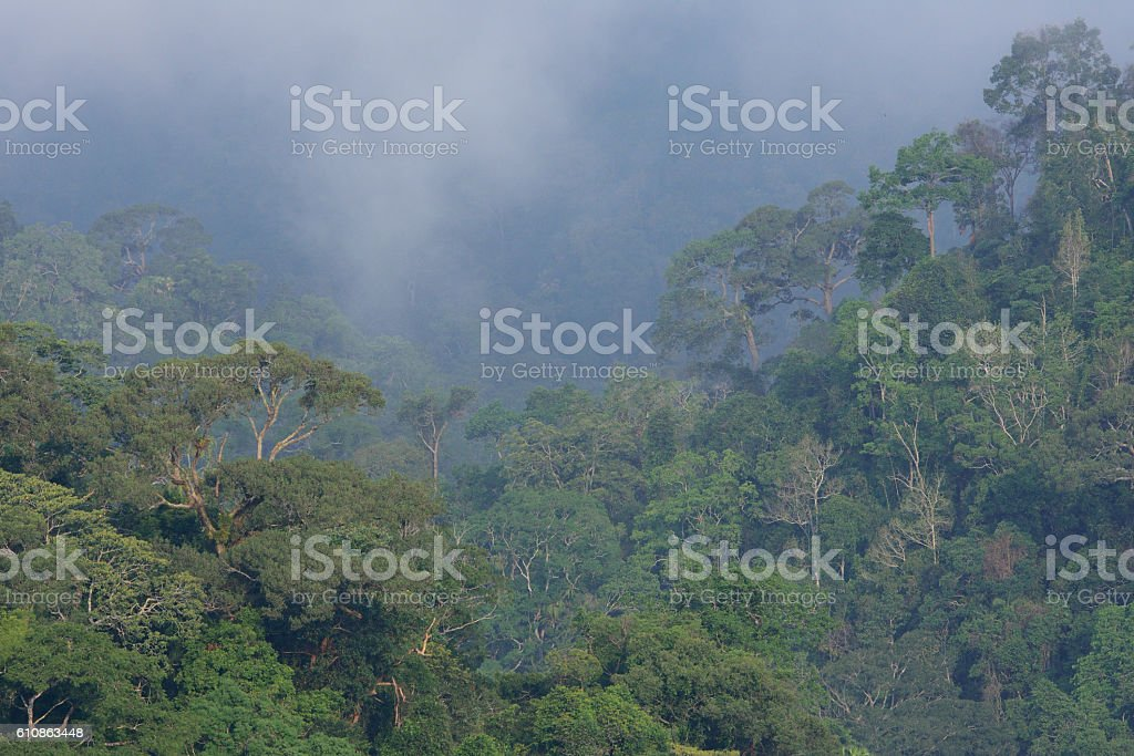 Top veiw canopy in tropical Amazon rain forest stock photo