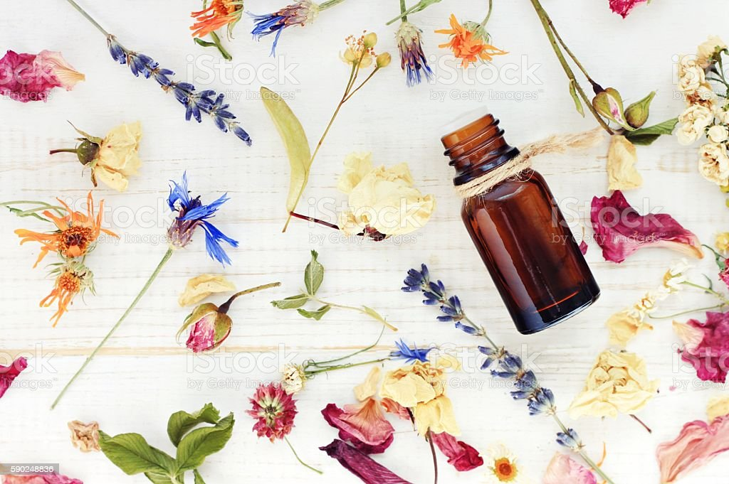 Top view dropper bottle among colourful dried flowers stock photo