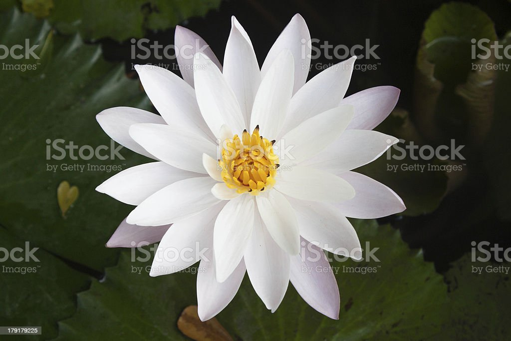 top view flower royalty-free stock photo