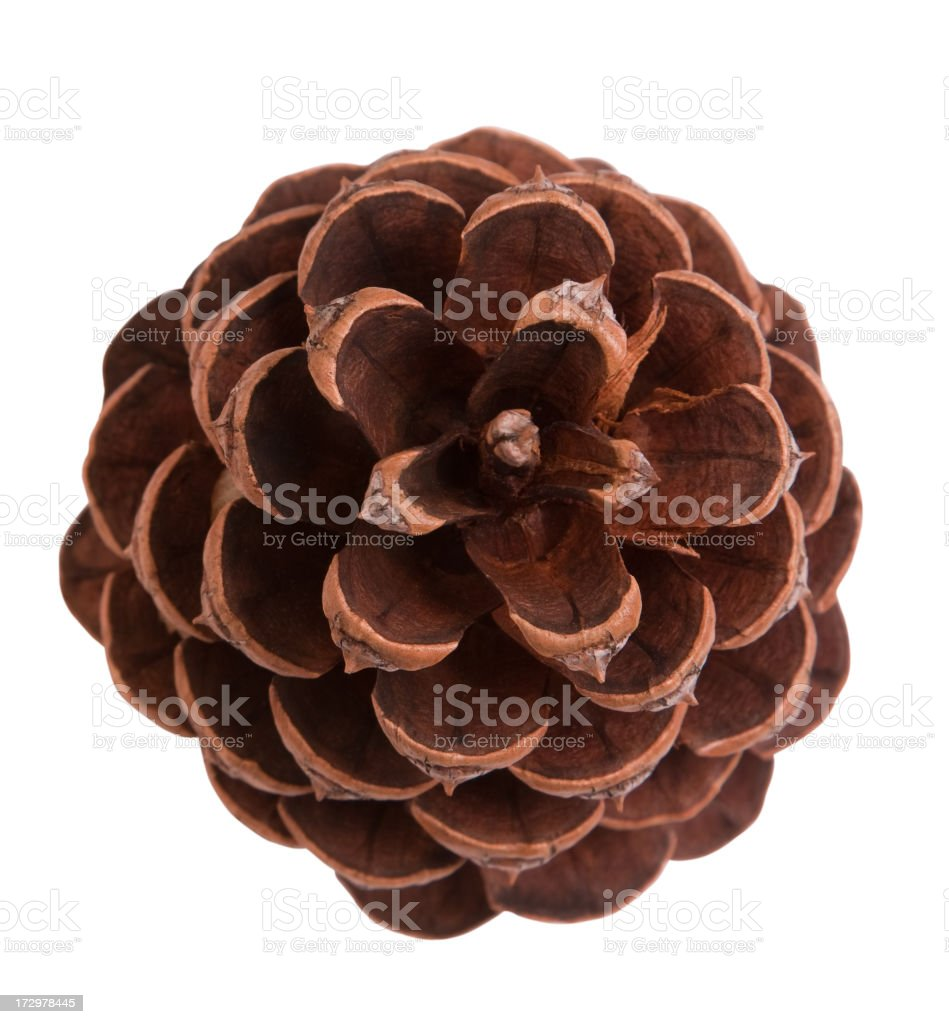 A top view of a brown pine cone on a white background stock photo