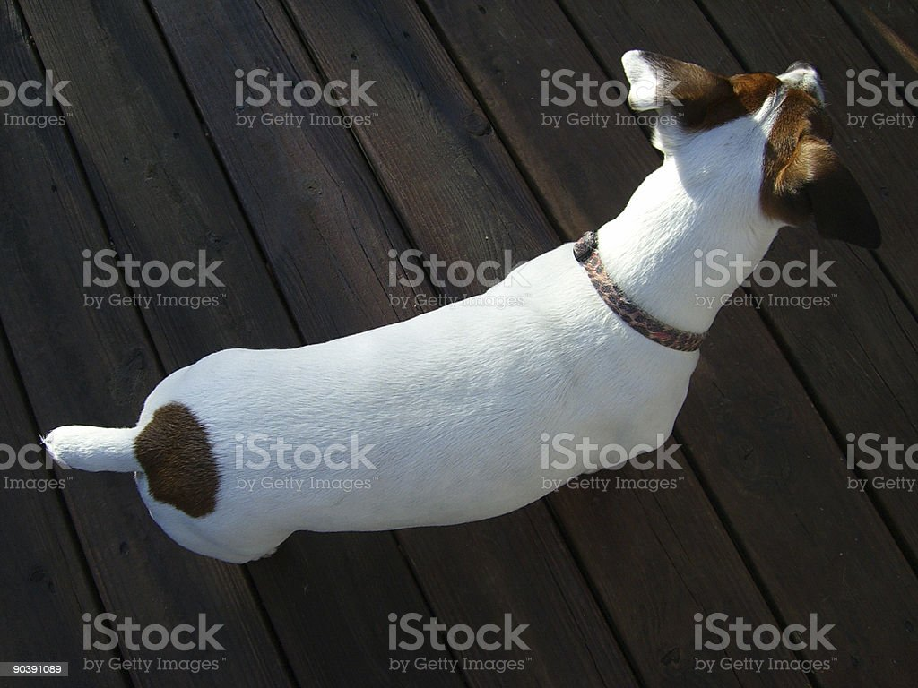 top view of a dog stock photo