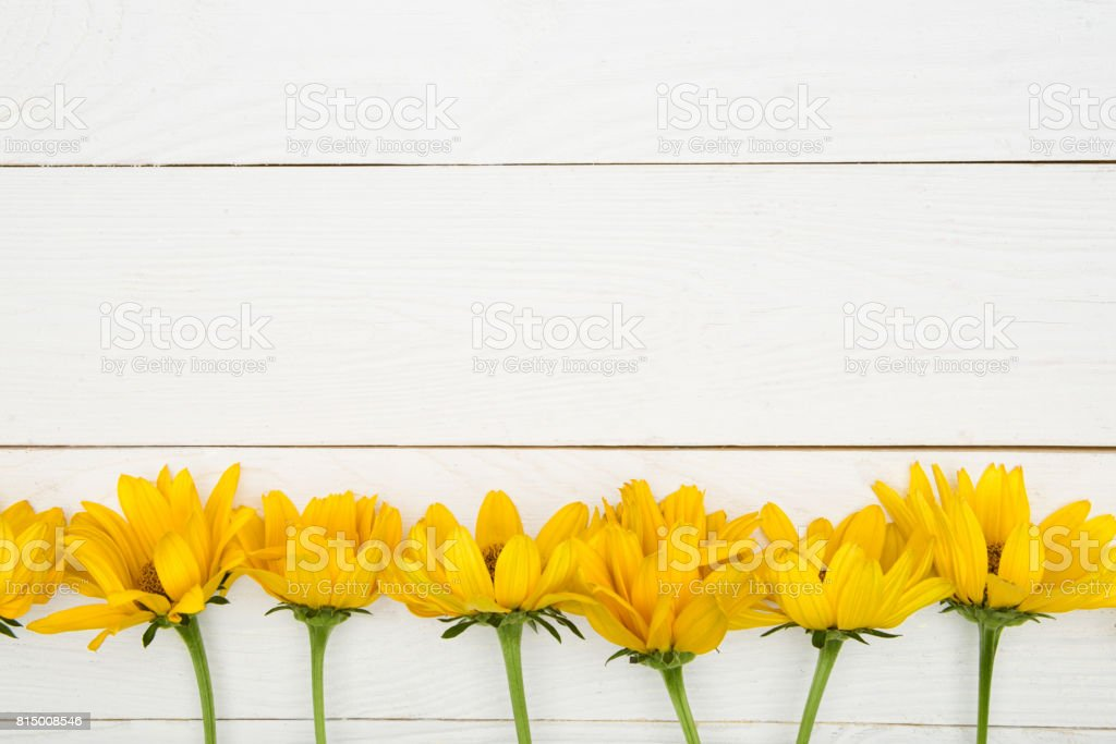 Top view of beautiful yellow chrysanthemum flowers on wooden surface stock photo