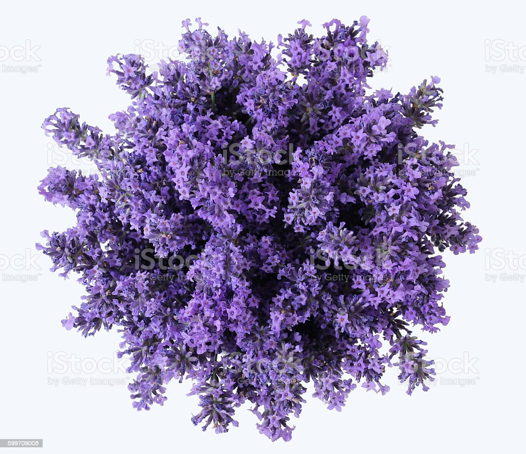 Top view of bouquet of purple lavender flowers. Lavandula bunch. stock photo