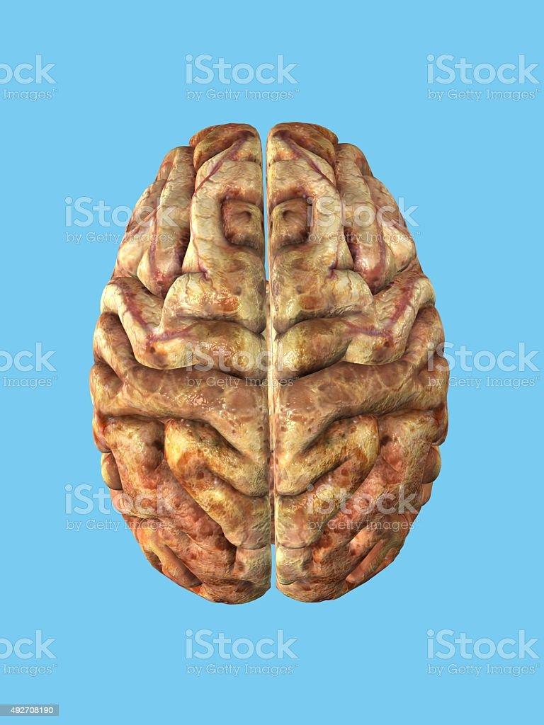 Top view of brain. stock photo
