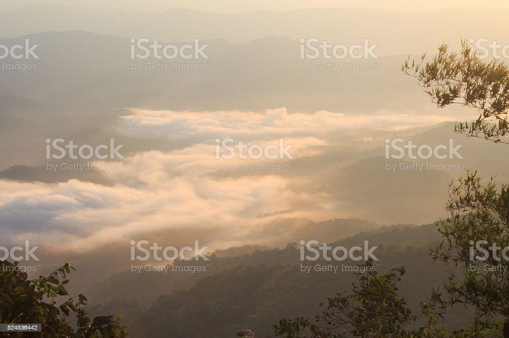 Вид сверху на горы лес с туман утром Стоковые фото Стоковая фотография