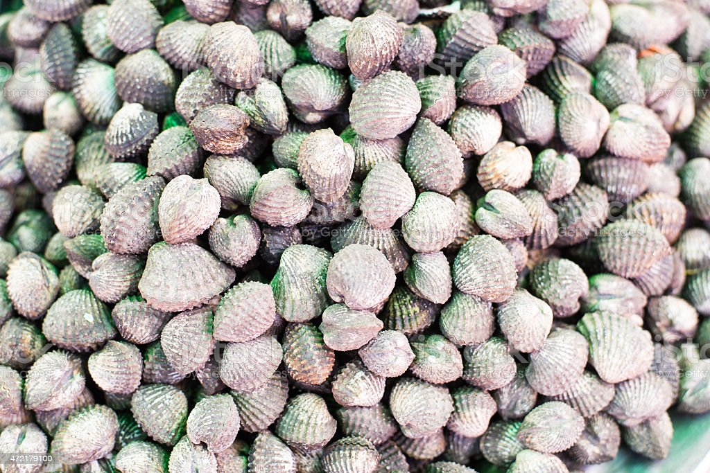 Top view of fresh Blood cockle in street market stock photo